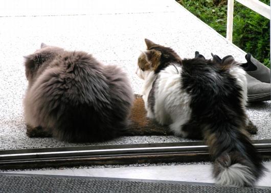 Freigänger-Katzen