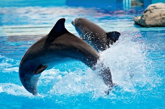 Delfin-Show