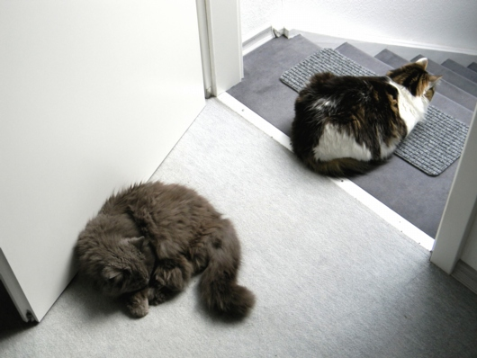 Security Cats