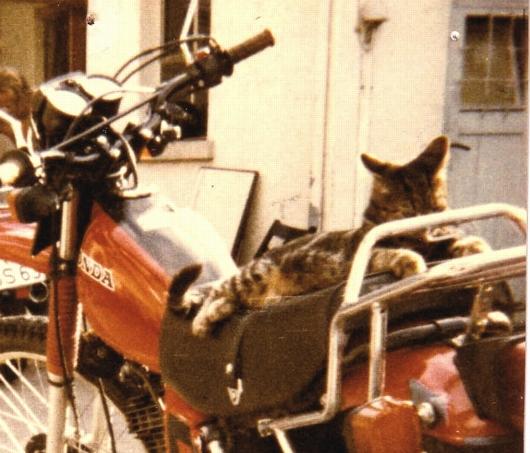 Honda-Katze