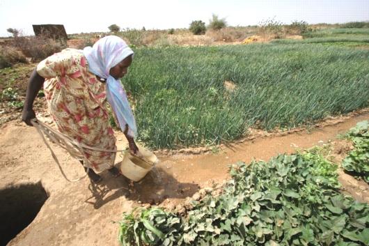 Ackerbau Sudan