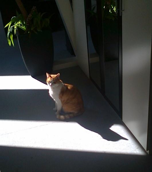 Oggy-Schattenspiel